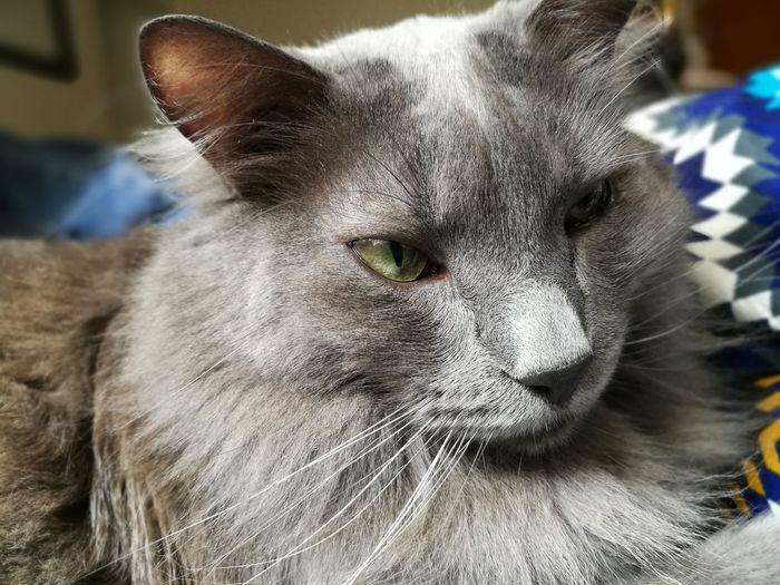 gato EyeEm Selects First Eyeem Photo