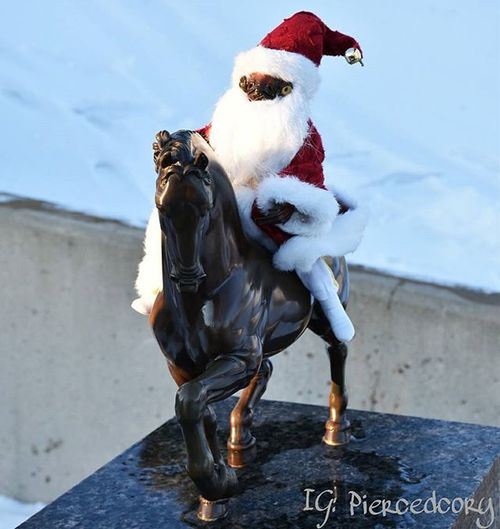 If you're asked to play Santa, IT'S A TRAP! Admiralackbaradventures Starwarstoys Starwars Starwarstoypics Admiralackbar