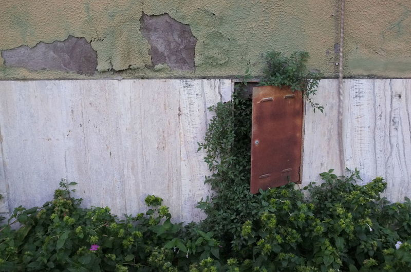 abandoned wall with wild plants flowers weeds. Abandoned Architecture Bad Condition Broken Building Exterior Built Structure Colonization Door Nature No People Old Plants Ruined Urban Wall Wall Wall - Building Feature Weeds Weeds Are Beautiful Too Wild Wild Flowers Wildflowers Adapted To The City