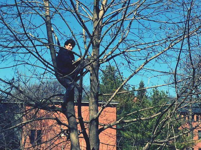 Trees Reading