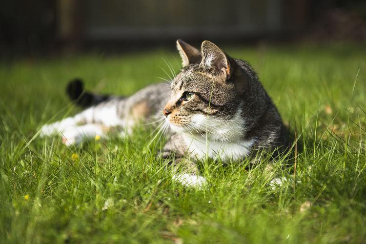 Cat relaxing on grass