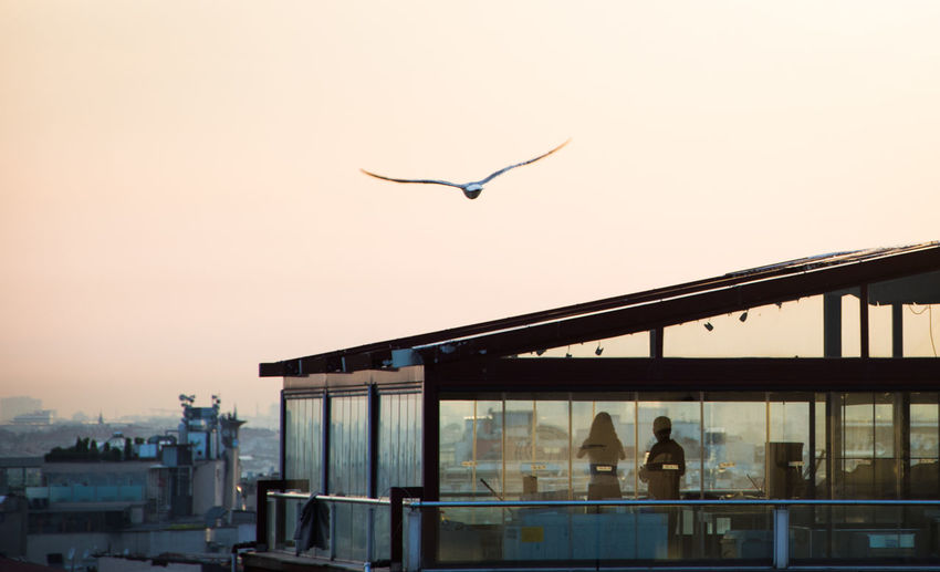 Couple Rooftop Animal Themes Animal Wildlife Animals In The Wild Architecture Bird Building Exterior Built Structure City Clear Sky Day Flying Nature One Animal Outdoors Rooftop View  Silhouette Sky Spread Wings Sunset