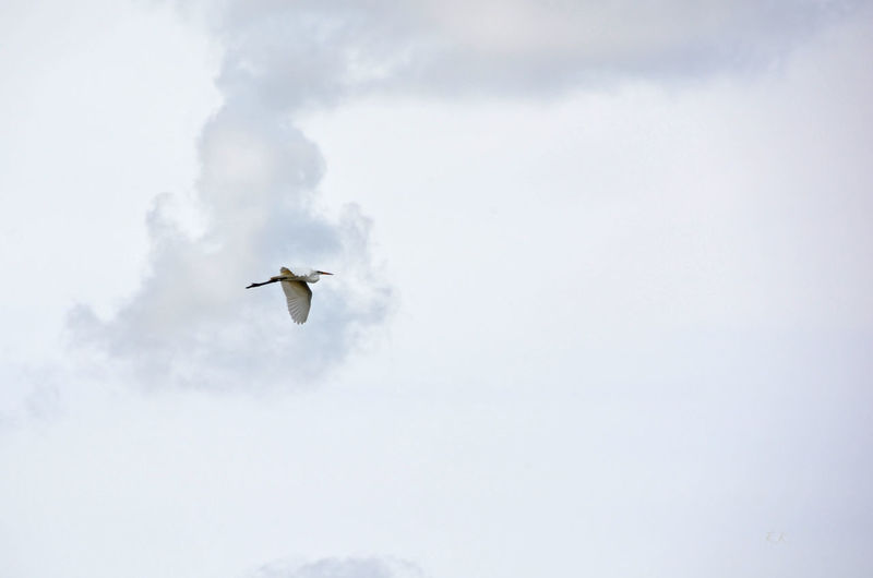 Low Angle View Of White Bird Flying Against Sky