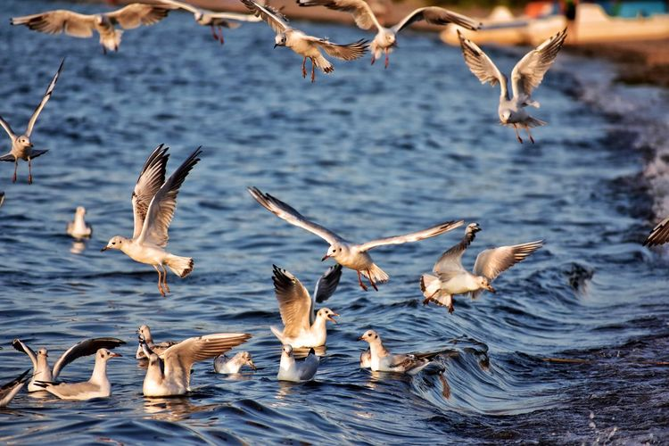 seagulls in the