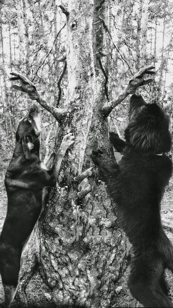 Hope & Onni ❤️❤️ Tree JaniVauhkonen Outdoors LG G4 Animals In The Wild
