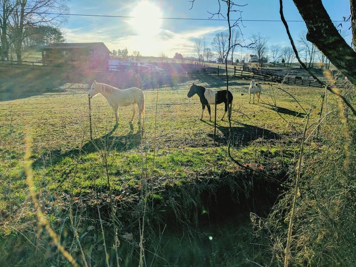 Animal Themes No People Sunlight Domestic Animals Grass Outdoors Beauty In Nature Earlymorning