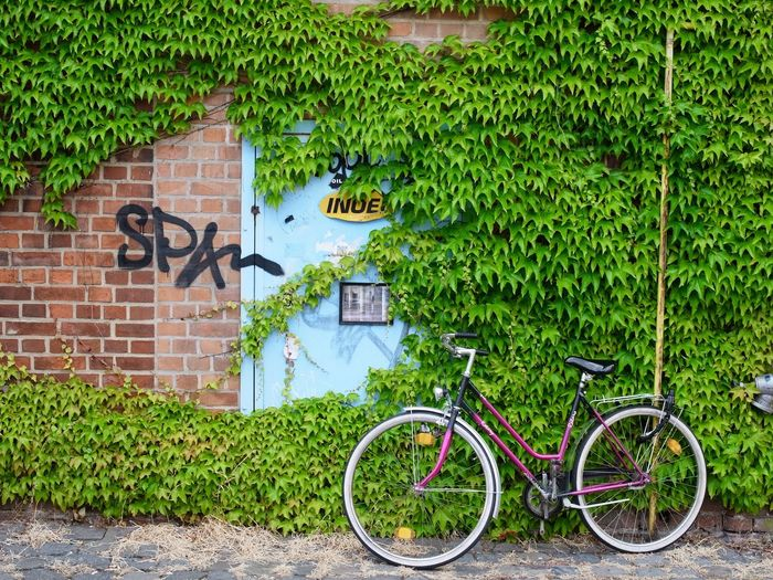 a bycicle in front of ivy on a brick wall in Lepzig, Germany Leiozig Architecture Bicycle Bike Brick Wall Building Exterior Bycicle City Day Green Color Ivy Nature Outdoors Plant Tag Transportation Urban