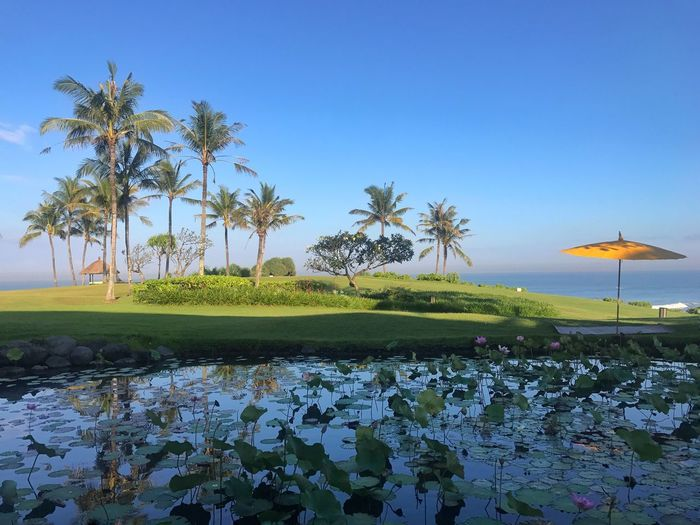 The Great Outdoors - 2017 EyeEm Awards Beauty In Nature Nature Tranquil Scene Palm Tree Tranquility Water Growth Scenics Tree No People Outdoors Clear Sky Blue Day Landscape Bali Holiday Lily Pond Yellow Umbrella Travel Destinations Sky Plant Ocean View Morning Light Breathing Space