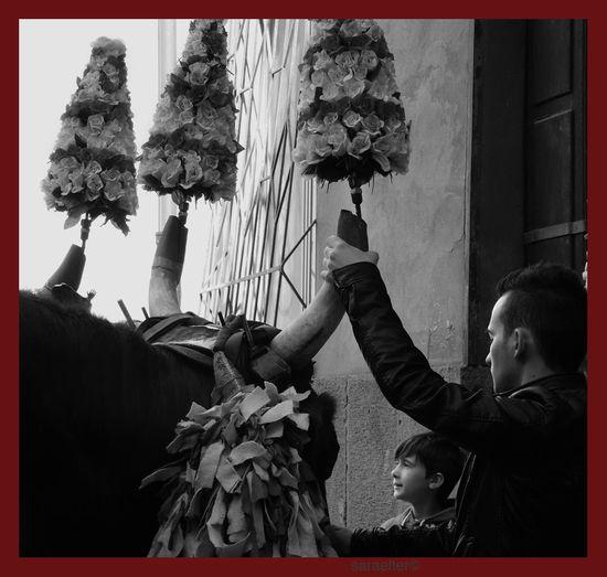 In May, in Cagliari, the procession of martyr Saint'Efisio, to which take part for thousands of years folkloristic groups coming from all the villages of the region, all wearing their traditional dress, start from the cathedral . Women sings praises, men take care of horses and wagons pulled by oxen for four days, when the statue, after being blessed in the sea, returns to his church in the middle of the city 1 May Departure parade early in the morning Sardegna, festa di Sant'Efisio, patrono di Cagliari A maggio a Cagliari parte la processione di Sant'Efisio martire, cui partecipano da millenni tutti i gruppi folcloristici e tutti i paesi della regione, ognuno con i propri costumi tradizionali. Le donne cantano lodi, gli uomini si occupano dei cavalli e dei carri tirati dai buoi per quattro giorni, quando la statua, dopo essere stata benedetta in mare, torna nella chiesa al santo intitolata. Sfilata di partenza, 1 maggio Catholic Traditional Ornament Animali Cagliari Catholic Church Folklore Sardo Holy Procession Oxen Pulls Processione Sardegna Real People Religione Cattolicaa Religioninthemaking Saanto Saint Saint Efisio Martyr Sant'efisio Martire Sardegna Sardinia Traditional Dress Tradizioni