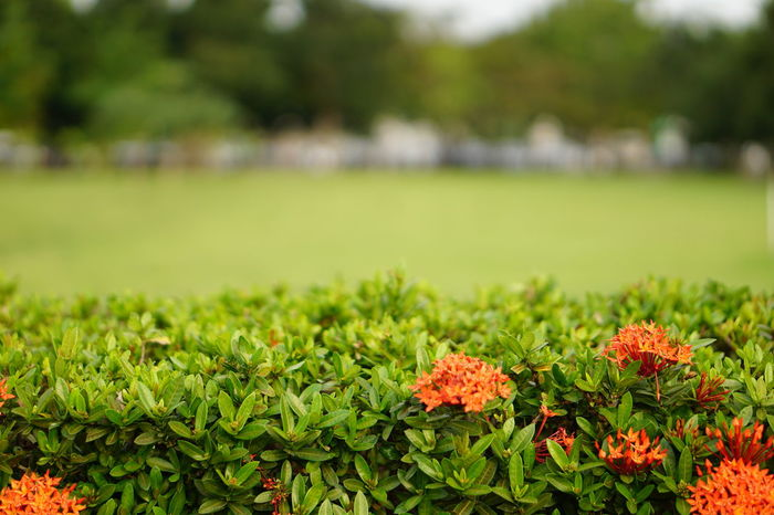 Green Color Grass Nature No People Plant Outdoors Growth Day Flower Beauty In Nature Defocused Freshness Close-up Bushy Park Red Flower Spike Flower Bushes And Flowers Bush Textured  Fragility Exploring Nature Relaxing Moments Freshness Beauty In Nature Summer