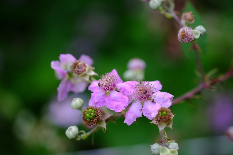 EyeEm Selects Flower Head Flower Plant Part Purple Nature Reserve Pink Color Close-up Plant