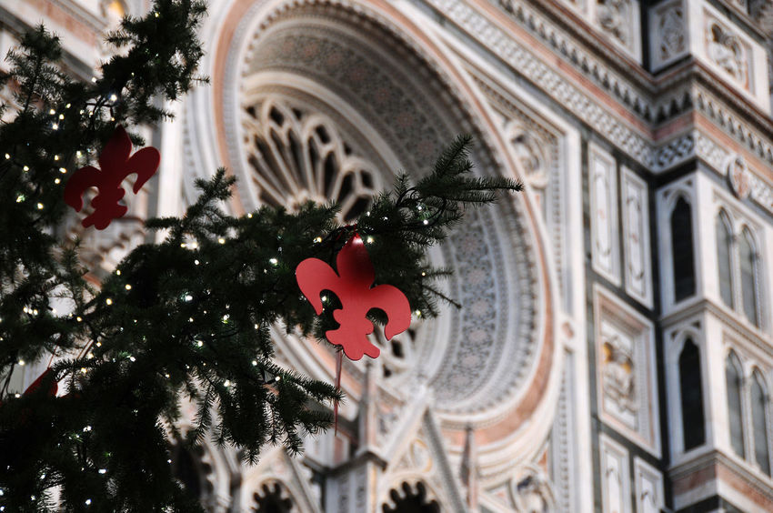 Christmas tree in Piazza del Duomo at Florence with the Cathedral of Santa Maria del Fiore on background, Italy Cathedral Christmas Duomo Firenze, Italy Holiday Light Maria Square Toscana Tuscany Xmas Xmas Tree Architecture Brunelleschi Built Structure Christmas Ornament Christmas Tree Decoration Dome Fiore Florence Giotto Ornaments