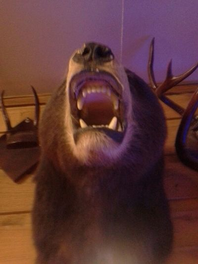I bearly got