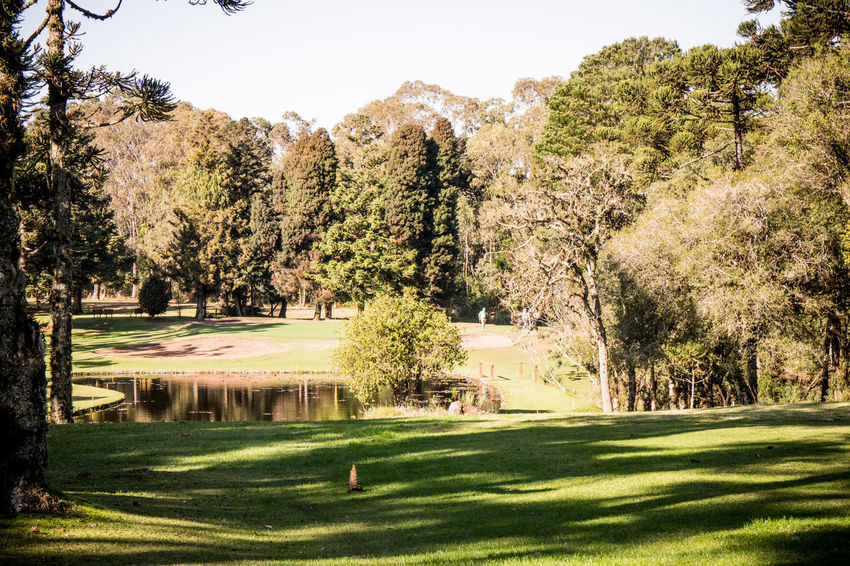 Gramado Golf Gramado, Brazil Beauty In Nature Day Golf Golf Club Golf Course Grass Green - Golf Course Green Color Growth Nature No People Outdoors Sand Trap Scenics Serra Gaúcha Sky Sport Sunlight Tranquil Scene Tranquility Tree