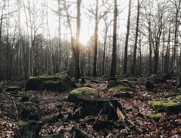 Forest Trees Sun Lovely Instaforest Free Soul Instatrees Photo Photooftheday Insta Instalike Instagood Instadaily Instamood InstaVsco Photography Phone Huawei P8 P8lite VSCO Vscocam Vscotrees Vscogood vscoforest vscophile vscoczenature vscocze vscoczech