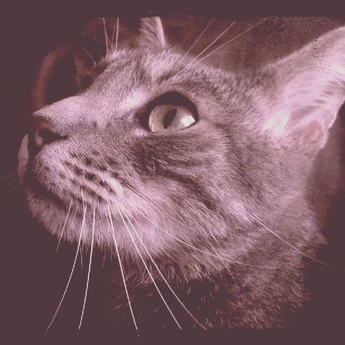 Hendrix Visiting Cat Catfight MachoCat Stoner Hunting HunterBitch Dope Shit