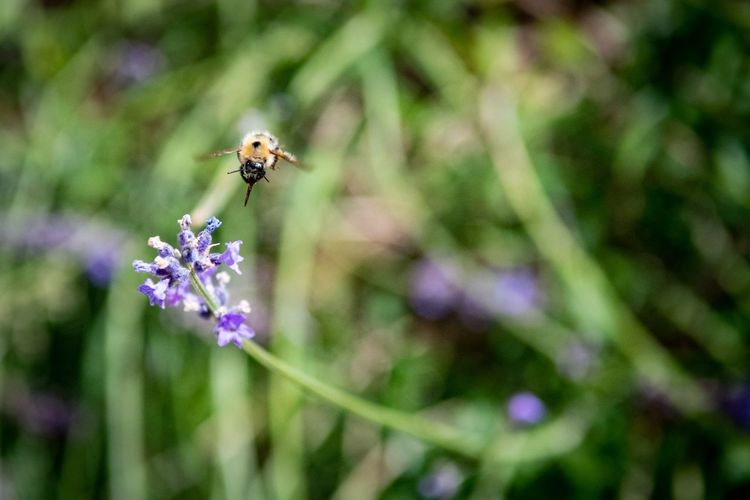 Nature at work. Bee Flower Flowering Plant Animal Themes Plant Invertebrate Insect Nature Flower Head