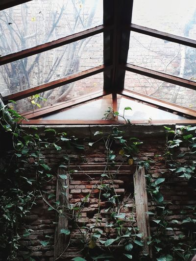 Day Window Architecture Greenhouse Built Structure Indoors  Nature Brick Wall Restaurant Decor Restaurant Interior Design Restaurant Decoration Lightwindow EyeEmNewHere