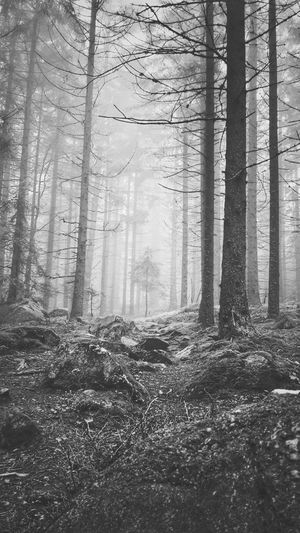 Blackandwhite Šumava Foggy Day Fog Forest Nature Travel Walking Trekking