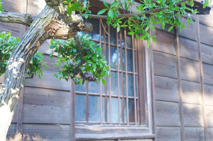 公園 Park Nature Nature Photography Japan Kagawa 自然 葉っぱ Japan Photography Green Color Green Tree Wood