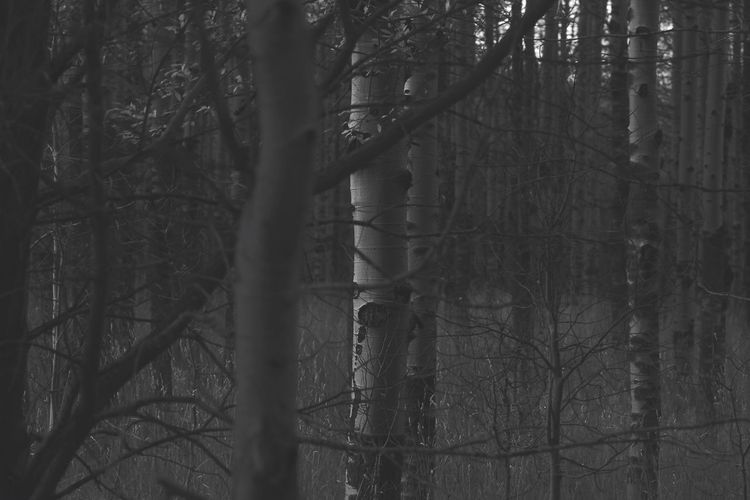 Forest Tree Tree Trunk Bare Tree Nature Branch Tranquility Day No People Outdoors Beauty In Nature Blackandwhite Black & White By Tisa Clark