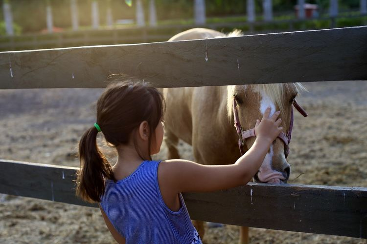 Rear View Of Girl Petting Horse In Ranch