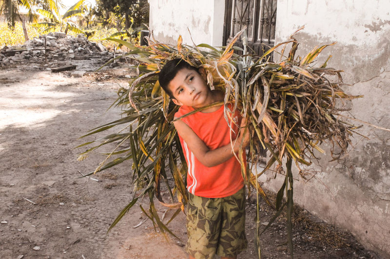en el trabajo. Tepic Raíces Tierra Centro San Blas Boy Fuerza Strong Campo Trabajo Niño Nayarit Mexico Child People One Boy Only Children Only Childhood Day Outdoors Tree One Person