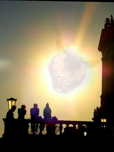 the force of a thousand suns Cat Light Luminous Model Hairy Model Dex Samsungphotography Philadelphia Philly City Sunset Atmospheric Mood People Astronomy City Sunset Silhouette Bird Sky
