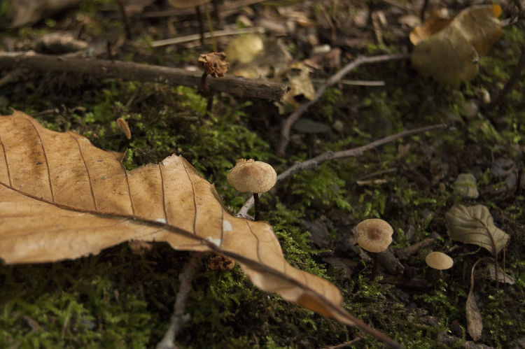 Small mushrooms on moss, and dry leaf Focus Object Little Mushroom Autumn Beauty In Nature Blur Close-up Dry Leaf Forest Ground Level View High Angle View Leaf Macro Macro Nature Moss Mushrom Mushroms Nature No People Outdoors Plant Tiny Mushrom Zoom