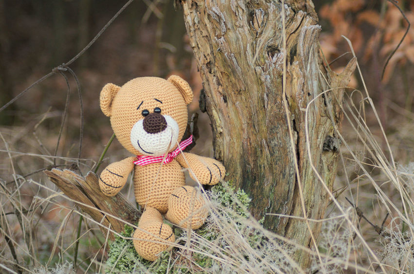 Teddy Bear Toy Stuffed Toy Teddy Forest Wald Outdoors Nature Natur Spielzeug Kuscheltier Produkt Product Photography ProduktFotografie Product