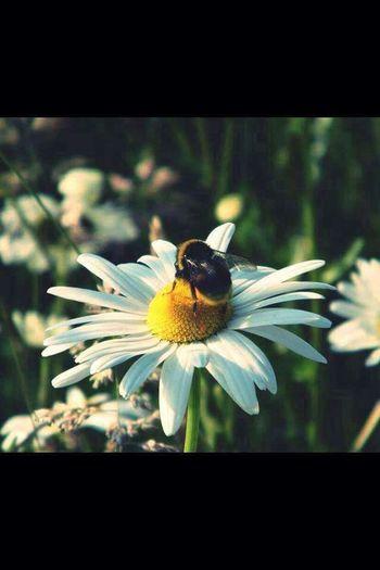 Nature Nature Photography Ireland