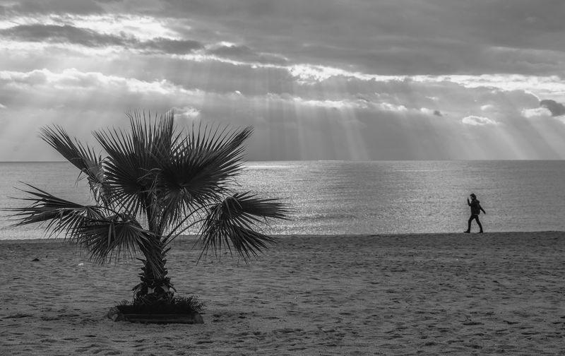 Palm and man Sea Turkey Alanya Palm Tree Blackandwhite Black And White Water Sea Beach Full Length Sky Horizon Over Water Sand Sand Dune Sandy Beach Idyllic Palm Frond Palm Leaf Arid Climate The Minimalist - 2019 EyeEm Awards