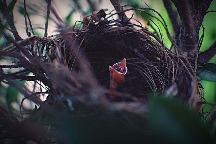 Close-up of young bird in nest