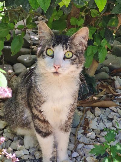 Portrait of cat by plants