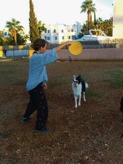 Black And White Dog🐕 Border Collie Day Dog Park Dog Playing Flying Dog Frisbee Frisbee Dog Outdoors Playing With Fris