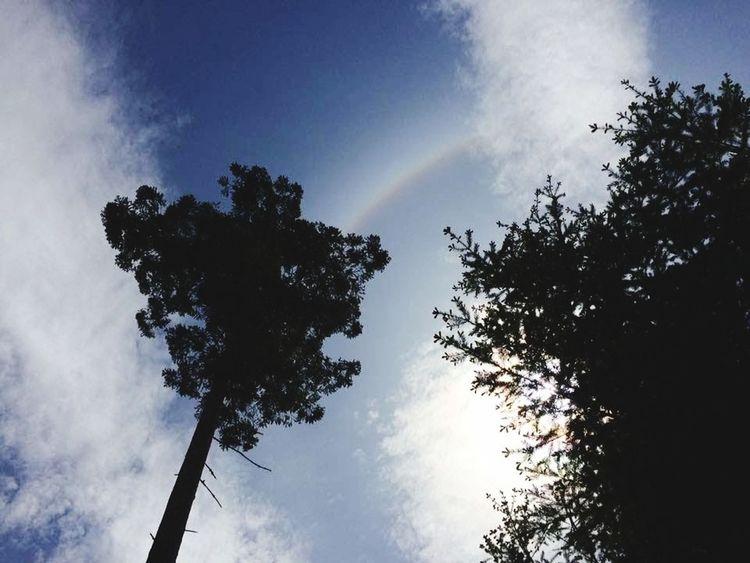 Filter 2. Tree Rainbow Sky Cloud - Sky The Still Life Photographer - 2018 EyeEm Awards EyeEmNewHere