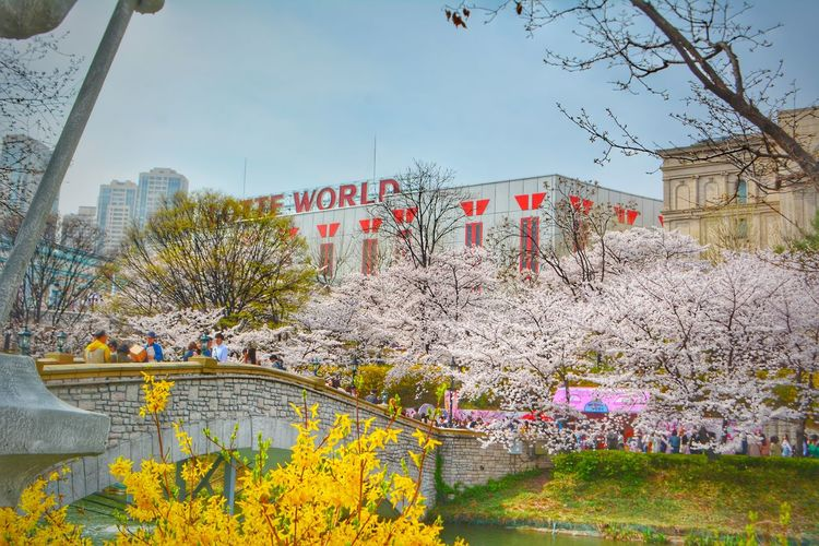 Lotteworld Tower Jamsil Cherry Blossom South Korea Korea Spring Travel Cherry Blossoms Brooming Springtime Blossom Flower LOTTEWORLD