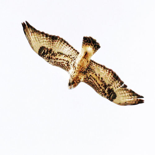 High angle view of bird flying over white background