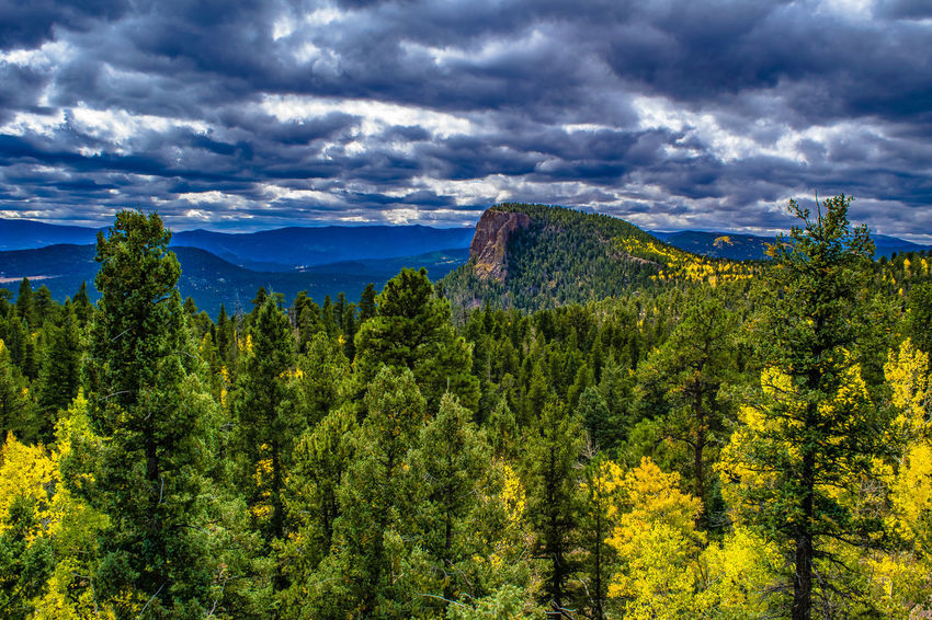 Lions Head in Colorado Colorado Denver Lions Head S Beauty In Nature Cloud - Sky Clouds Day Fall Foliage Forest Forest Photography Green Color Growth Landscape Mountain Nature No People Outdoors Pine Tree Scenics Sky Tree