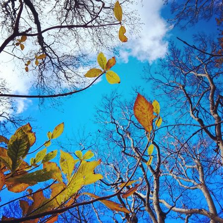 IPhoneography Nature Trekking Mt.Daisen Mountains Colors Autumn