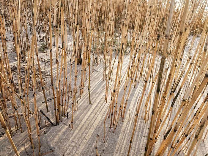 Close-up of bamboo wood