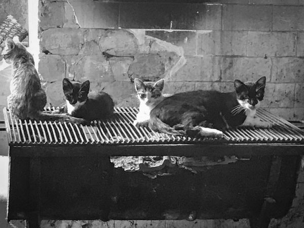 Cats on grill. Domestic Cat Animal Themes Domestic Animals Cat Pets Mammal Feline No People Outdoors Day Nature