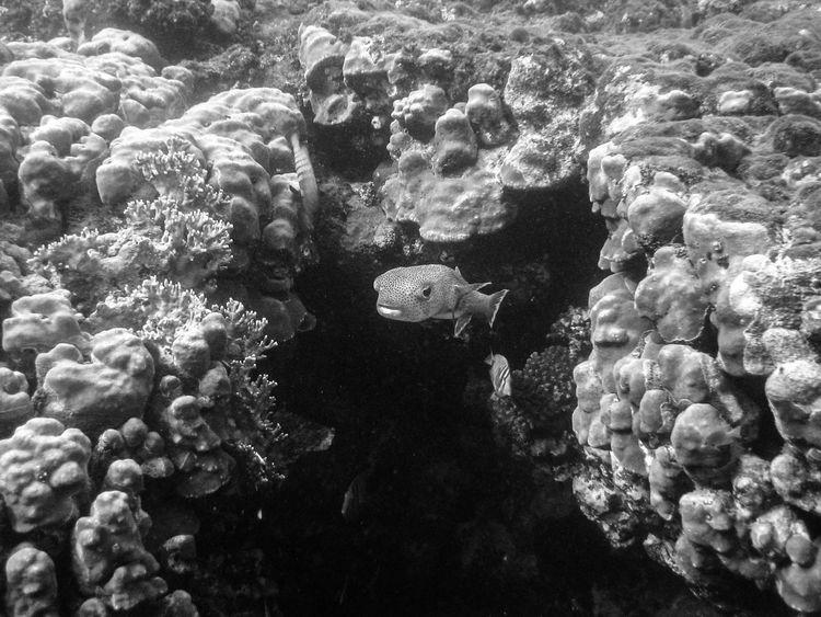 Black And White Coralreef Fisch Fish Korallenriff Marsa Alam Underwater Underwater Photography Unterwasser