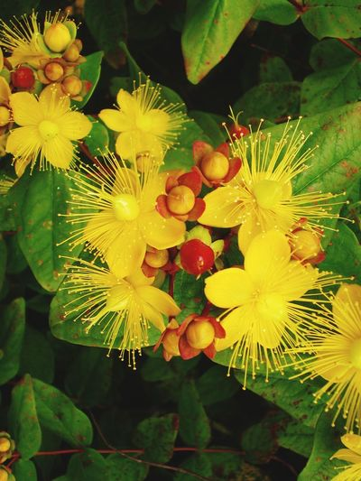 Flower Plant Growth Flower Beauty In Nature Freshness Flowering Plant Close-up Leaf Nature Fragility Plant Part Vulnerability  No People Flower Head Day Yellow Inflorescence Petal Outdoors High Angle View