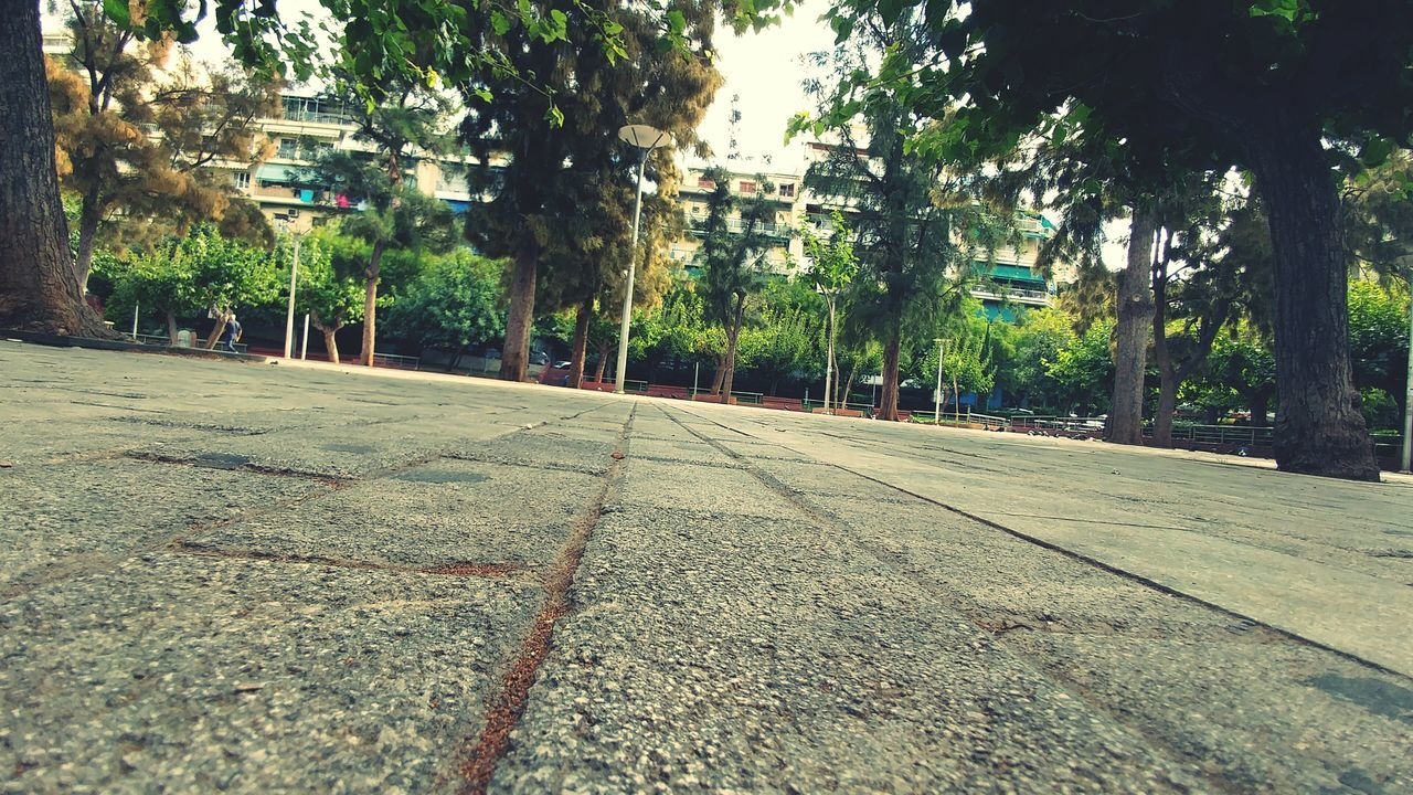tree, road, outdoors, no people, growth, day, transportation, the way forward, city, nature