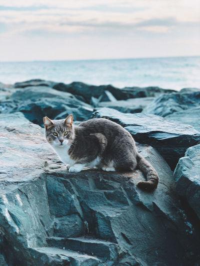 Cat in a sea