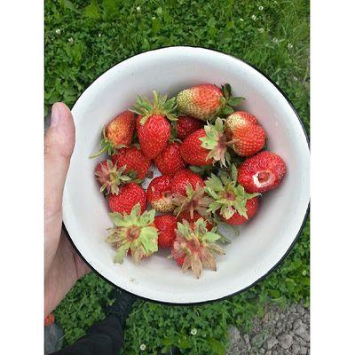 клубничка огород Фазенда Villagelife village strawberry me hand вкуснятина