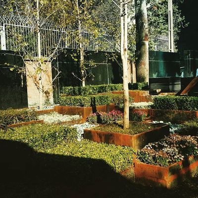 Flowers Boxes Flowerbox Cubic Cubicplanting Planting Landscape architect: maryam Yousefi @mymyousefi Project manager: Morteza Adib Landscapearchitecturelife Landscape Architecture Archimodel ARCHITECT LandscapeArchitecture Landscapedesign Corten Cortensteel