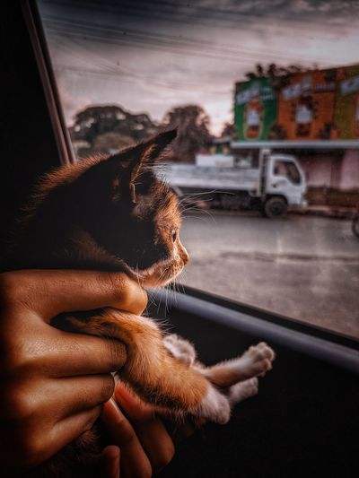 Close-up of a kitten looking outside from a car window