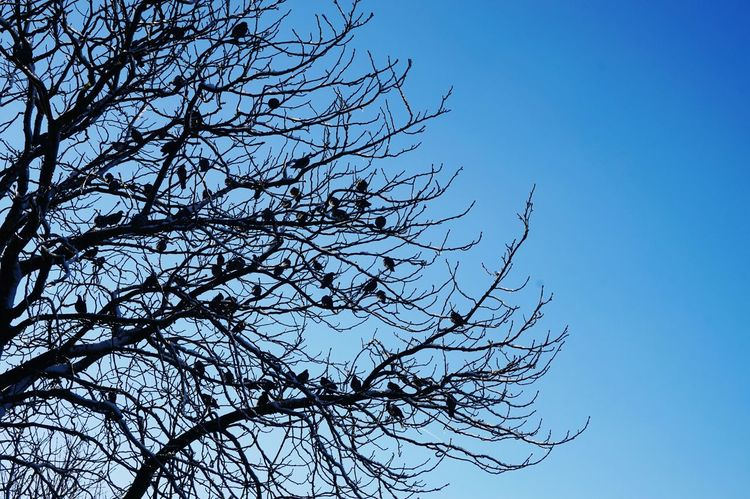 Tree Low Angle View Nature Clear Sky Branch Sky Beauty In Nature No People Outdoors Close-up Day Bodenseeregion Travel Winter Cold Temperature Bird Nature Cloud - Sky Sky